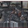 YTL International Recalls Drywall Lifts Due to Injury Hazard